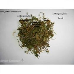 100 grs ALECRIM - Rosmarinus officinalis
