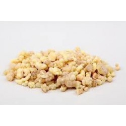 20 grs sementes celastrus paniculata
