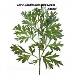 100 grs LOSNA - Artemisia...