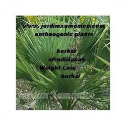 20 grs saw palmetto-...